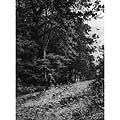В лесу. Упавшее дерево (In the forest. Fallen Tree)