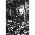 Лесной ручей (Forest Stream)