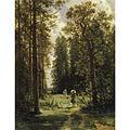 Хвойный лес (Coniferous Forest)